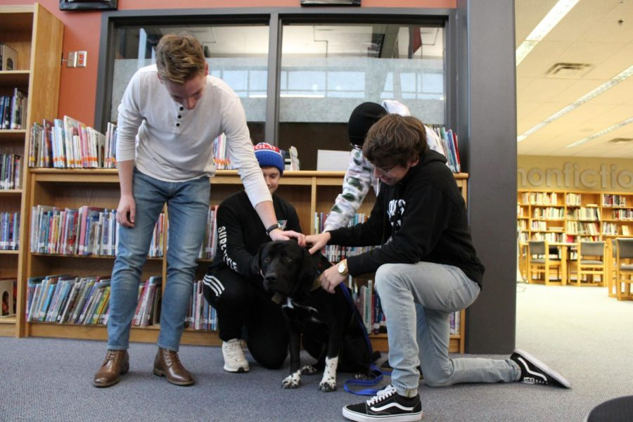 Emotional+support+dogs+Bear+and+Bentley+are+some+of+the+newest+faces+around+LHS.+Juniors+JJ+Morgan%2C+Jude+Russell%2C+Jaxon+Emry+and+Ben+Ervie+found+Bear+in+the+library+to+help+them+de-stress+from+school.Photo+by+Charlene+Nguyen+